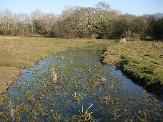 Stream across a lawn - geograph.org.uk - 1306646
