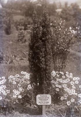 Tree planted by Aeta Lamb