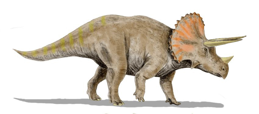 https://upload.wikimedia.org/wikipedia/commons/c/ce/Triceratops_BWMK.jpg