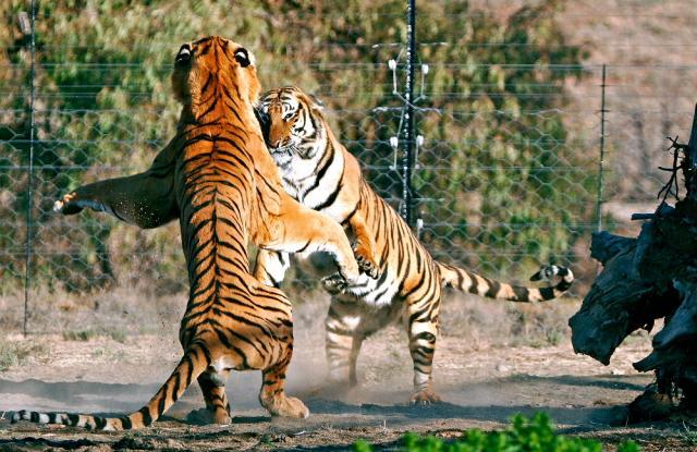 Battle Cats Save Scum Different Device