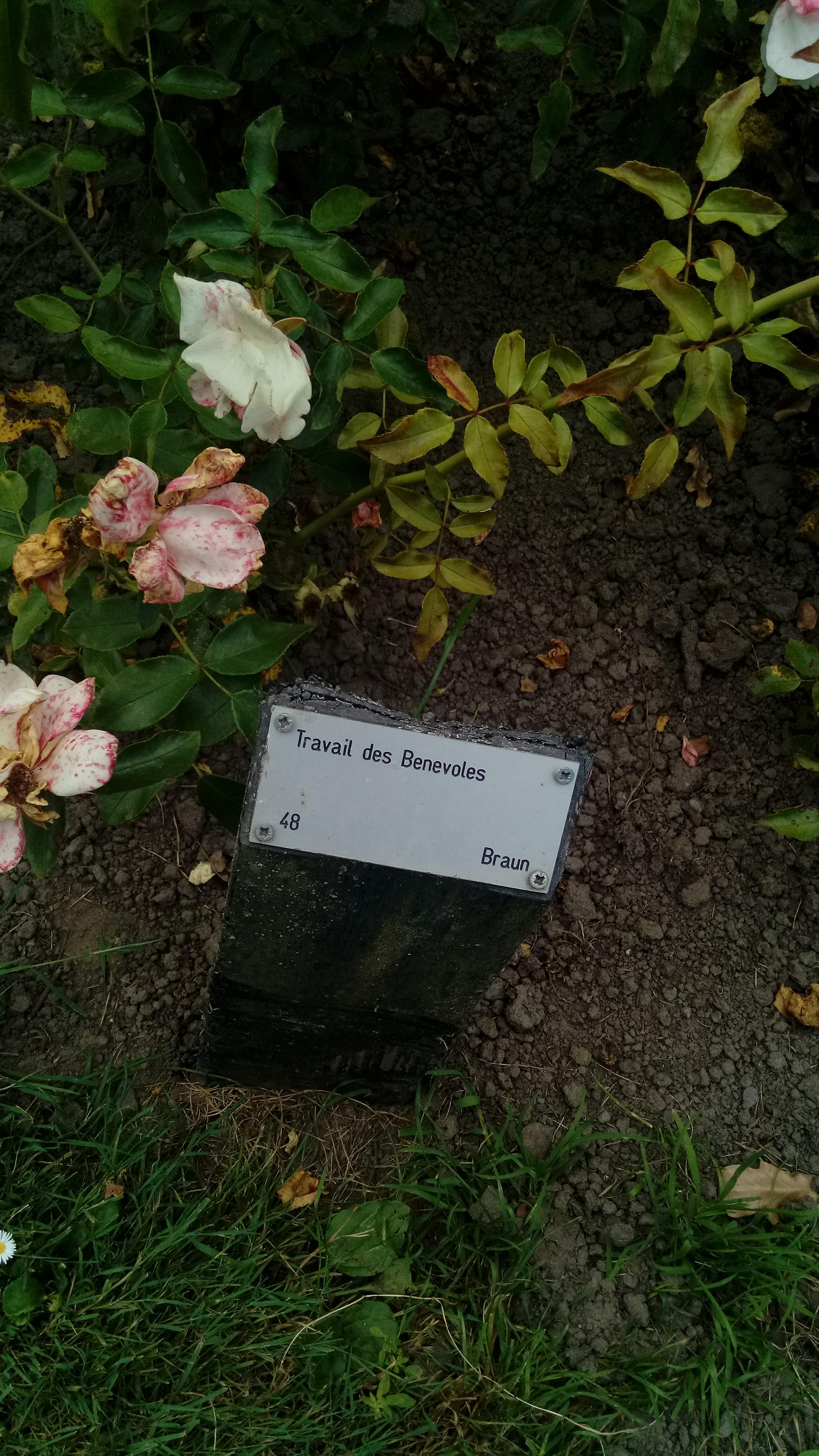 File20. Travail de Benevoles   Braun sign, Rosarium Winschoten ...