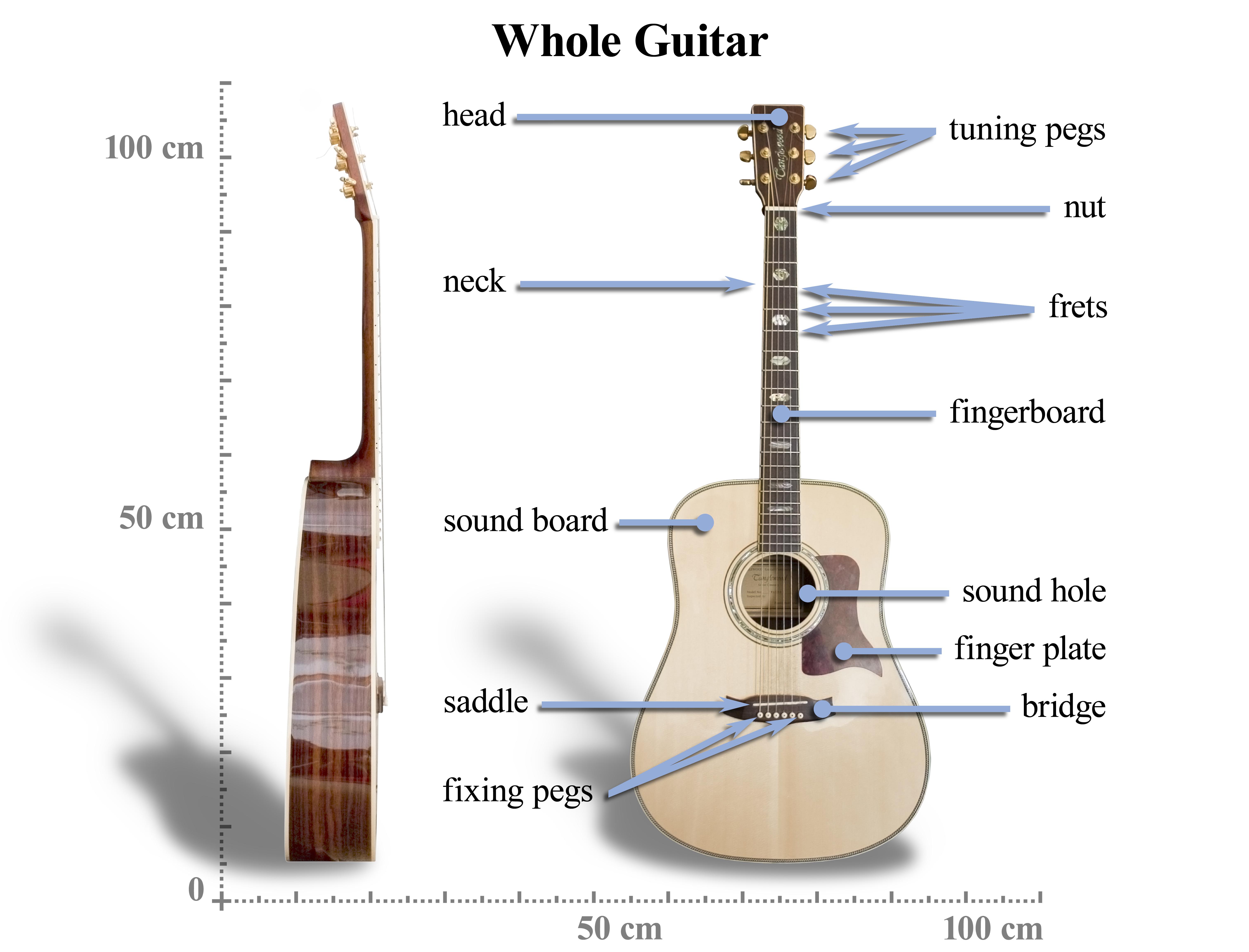 Fileacoustic Guitar Anatomyg Wikimedia Commons