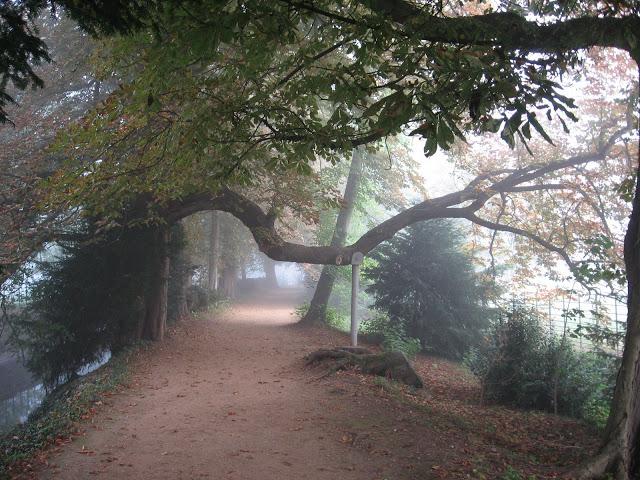 Addison's Walk, Magdalen College, Oxford 2008