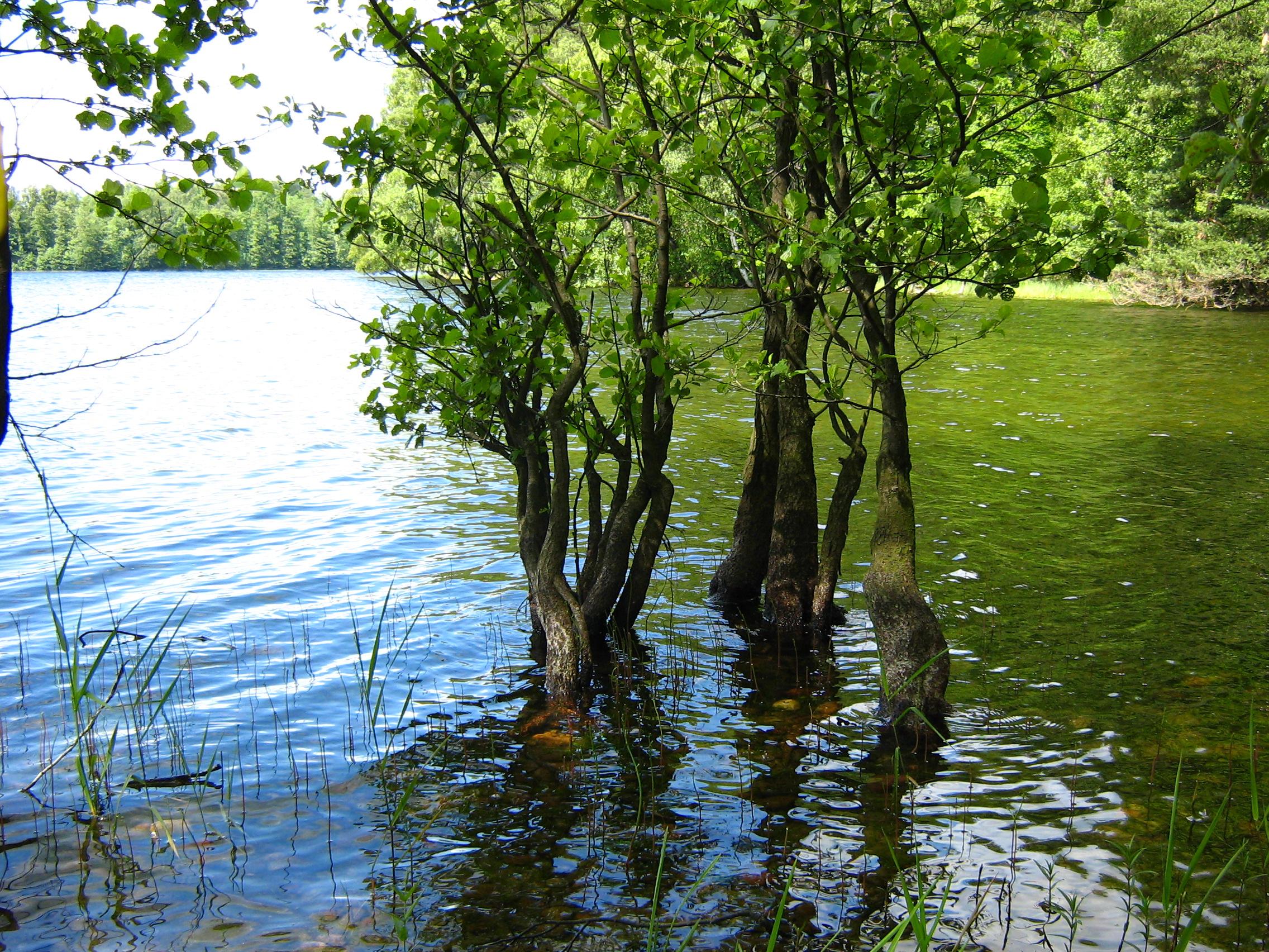 un aulne les pieds dans l'eau