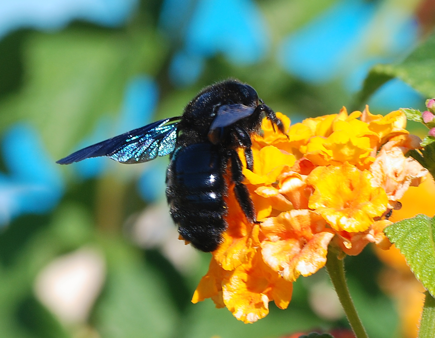 пчела плотник фото это тату