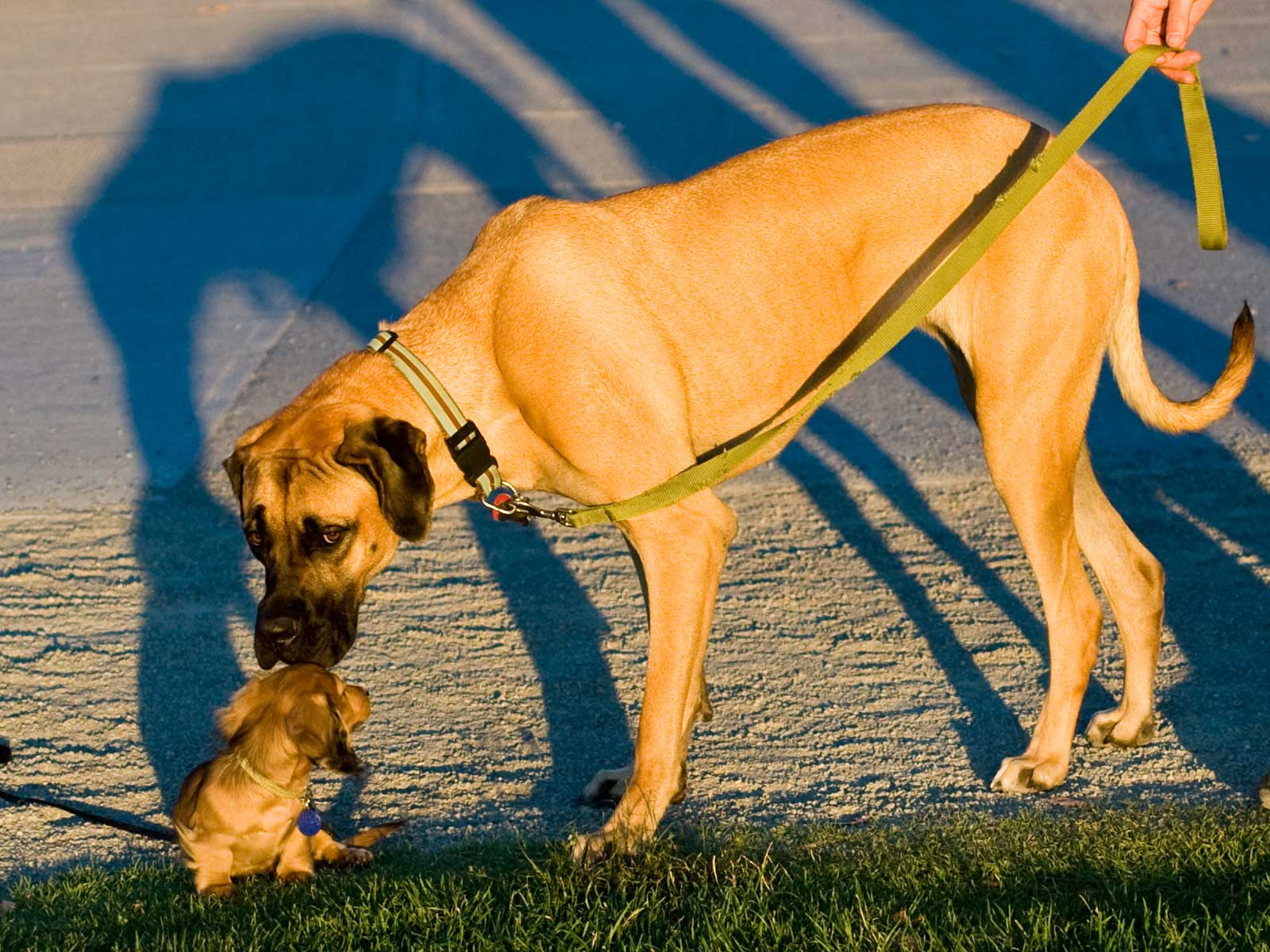 File:Big and small dog.jpg - Wikimedia Commons
