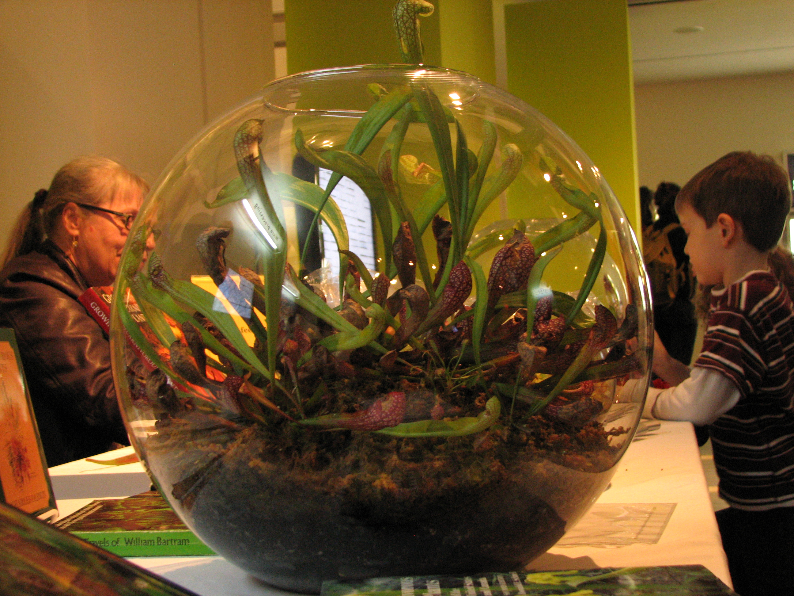 File Carnivorous Plant Terrarium Martha Miller Jpg Wikimedia Commons