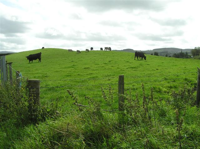 File:Cattle at Crew - geograph.org.uk - 1478556.jpg