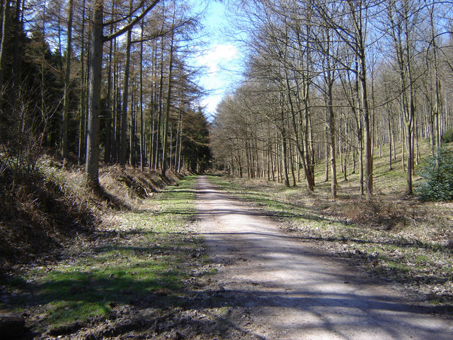 Chawton Park Woods - geograph.org.uk - 148392
