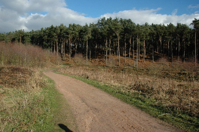Delamere Forest - geograph.org.uk - 21117