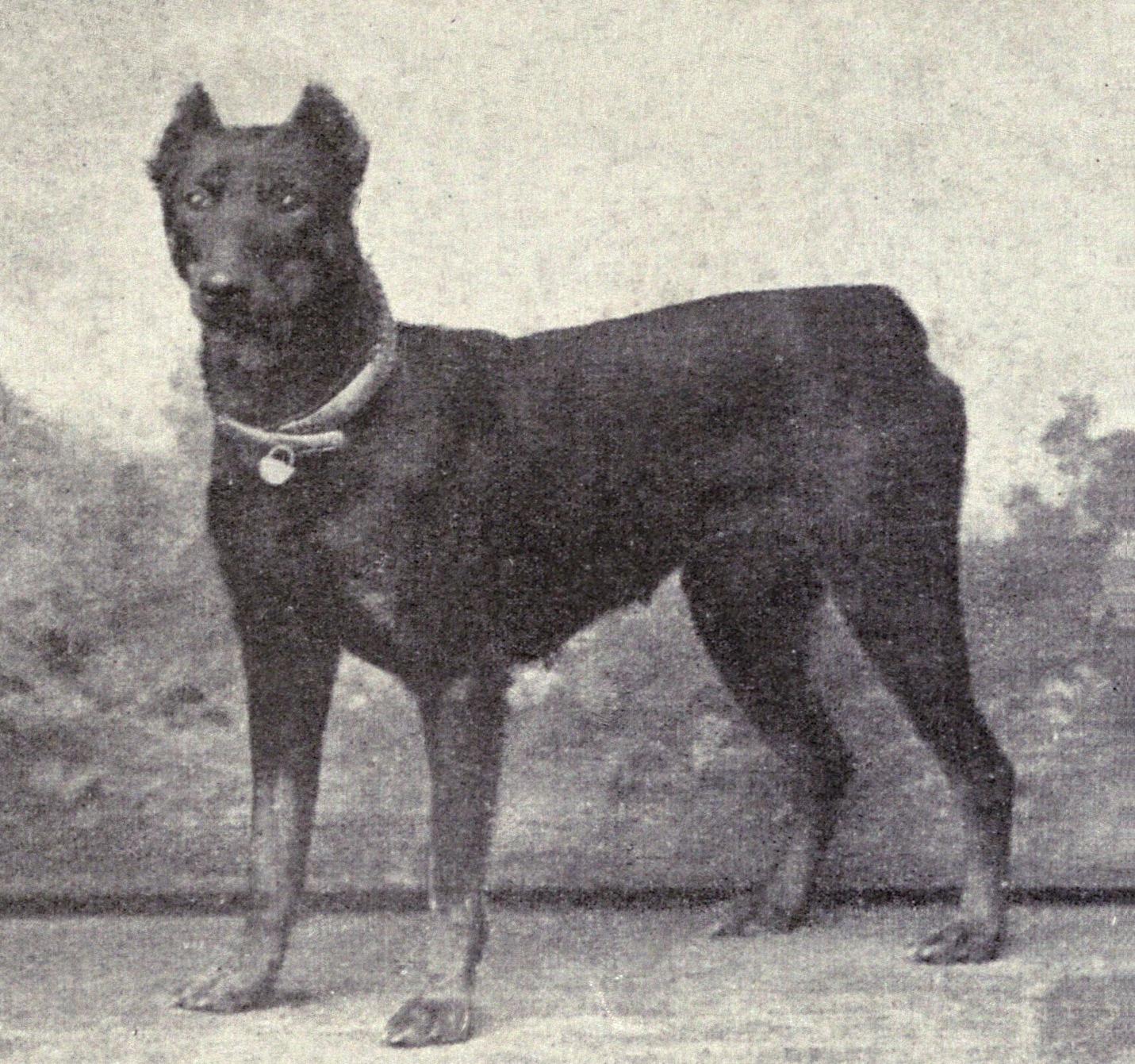 Dog Bite Citation In Georgia