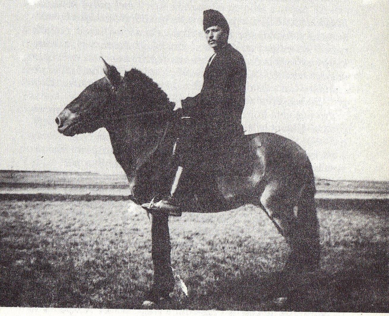 Przewalski's Horses - Bulbs