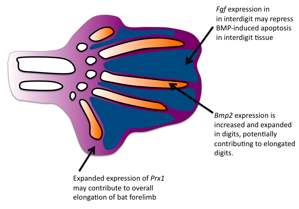Mouse Anatomy Diagram Related Keywords Suggestions For Mrcp Mtm