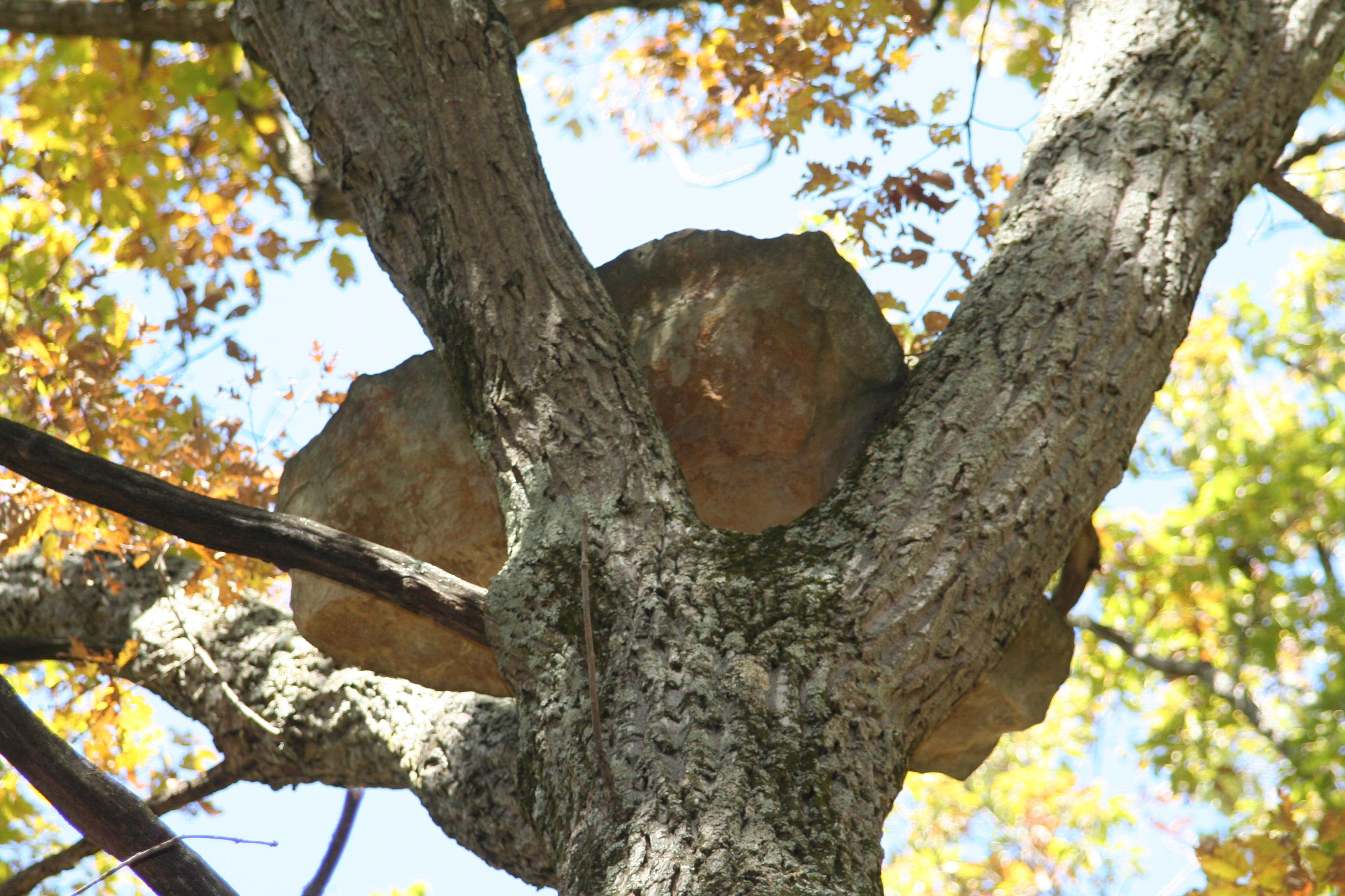Yellowwood State Forest - Wikipedia