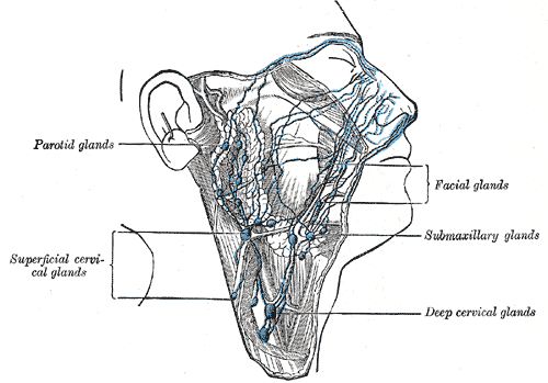 Facial lymph nodes wikiwand facial lymph nodes the lymphatics of the face ccuart Gallery