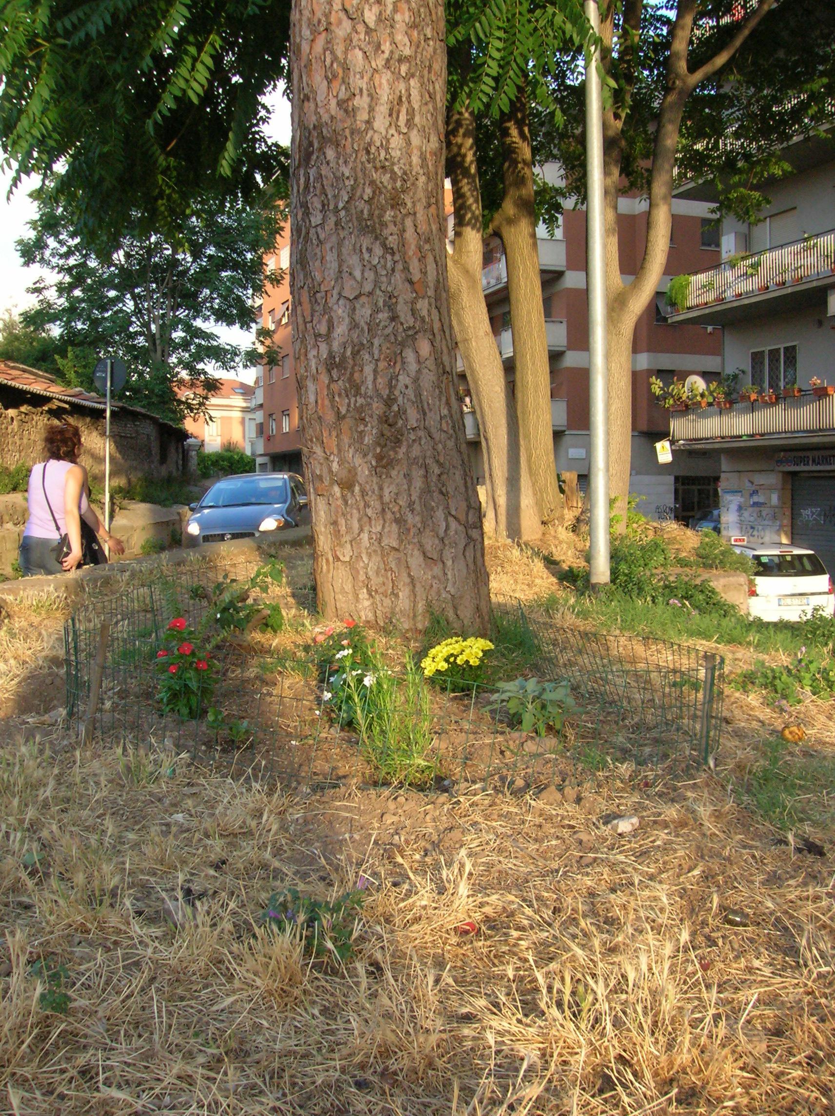 File:Guerrilla gardening in Pigneto (Rome) 2.JPG - Wikimedia Commons
