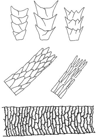 Haarstrukturen im Vergleich
