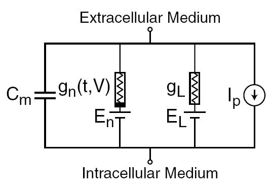 hh equivalent circuit model