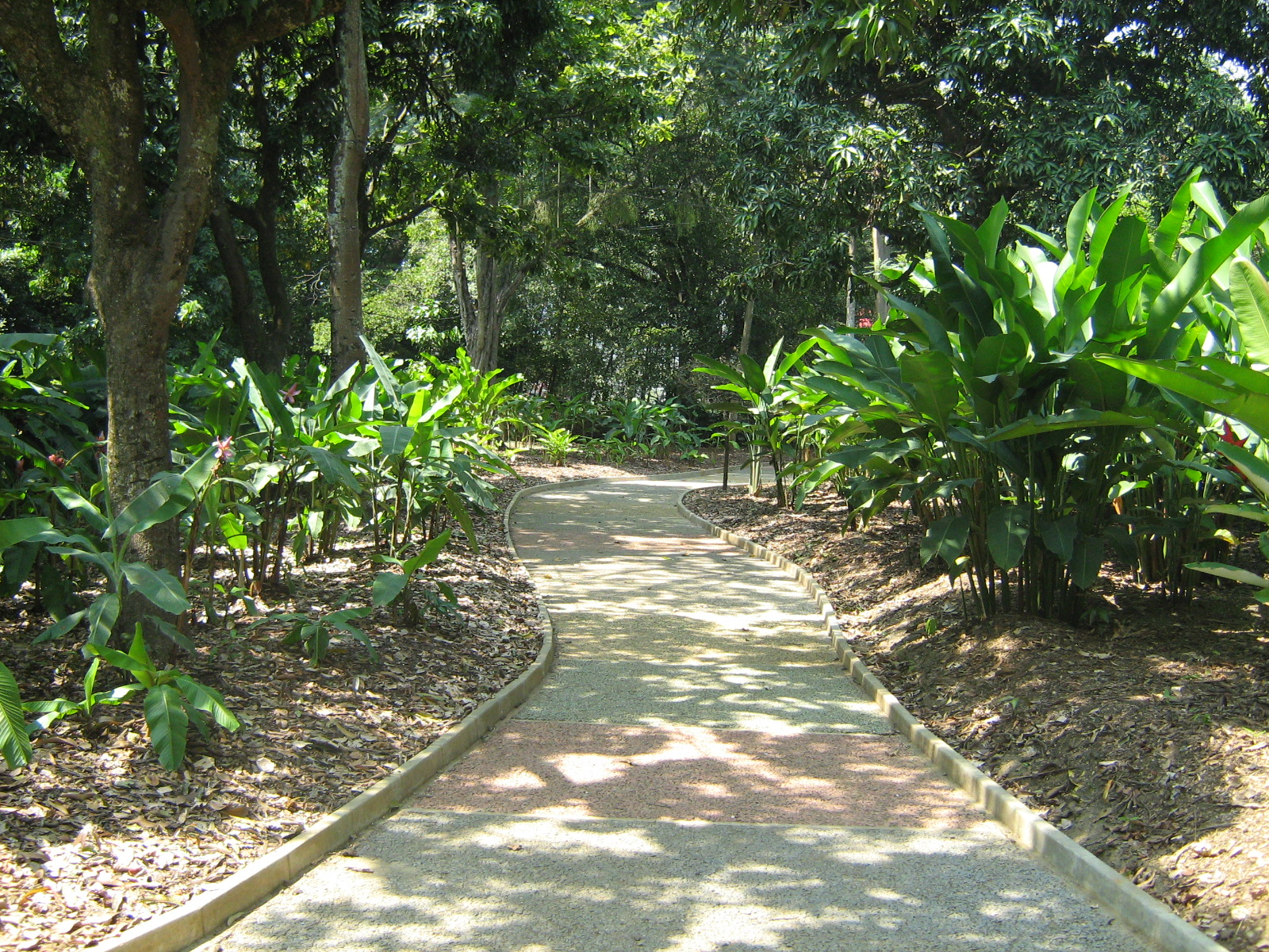 File jardin botanico de medellin camino 2 jpg wikimedia for Bodas en el jardin botanico de medellin