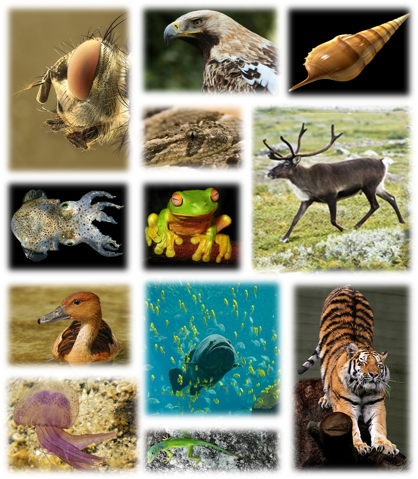 Animals: Global Biodiversity