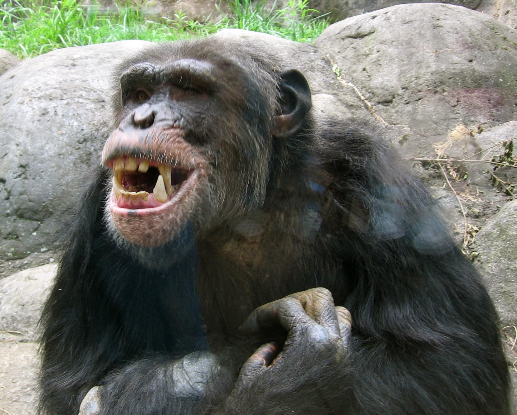 a description of attack of the apes after studying evolution The attack ended when one member of the gang chimpanzees to her study site with evolve a capacity for violence through convergent evolution.