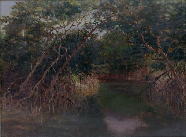 Mangrove Swamp Wikstrom 1902