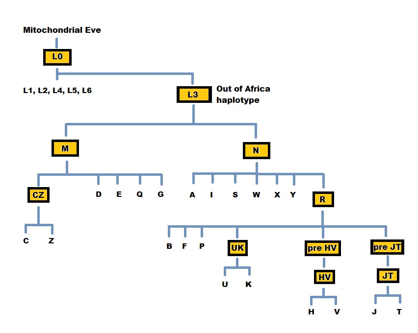 dating mitochondrial dna This scheme is attractive because it does not depend on radiometric dating or other in the mitochondrial dna dna sequences of two.