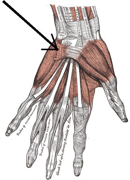 a mutatóujj metacarpalis phalangeális ízülete fáj