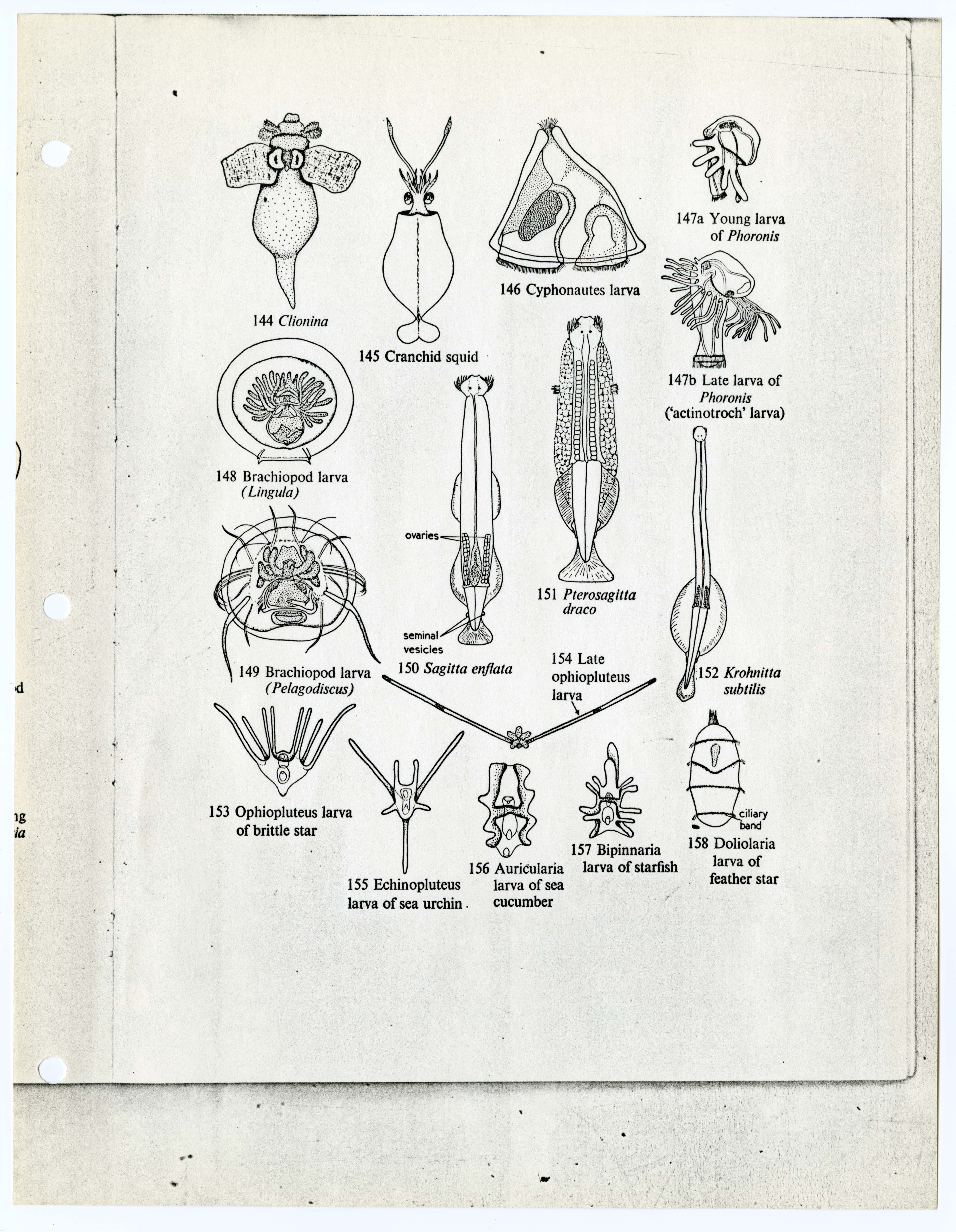 Si Conversion Chart: Plankton identification chart Vema cruise 27.jpg - Wikimedia ,Chart