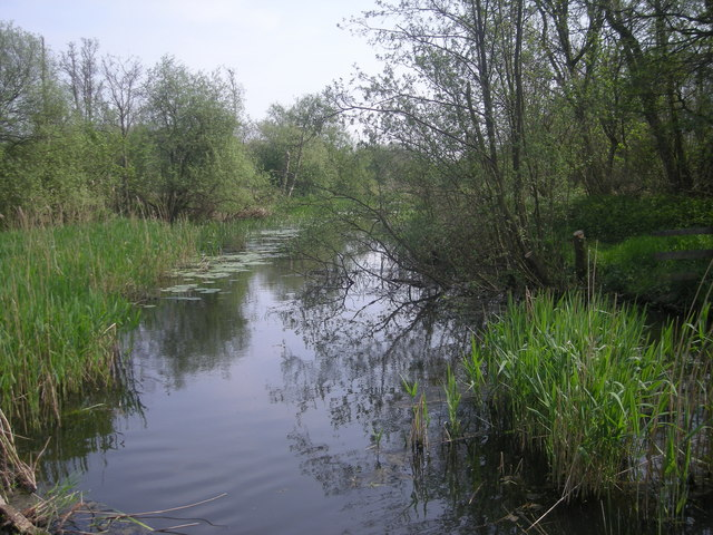 Reed beds and lily pads - geograph.org.uk - 797880