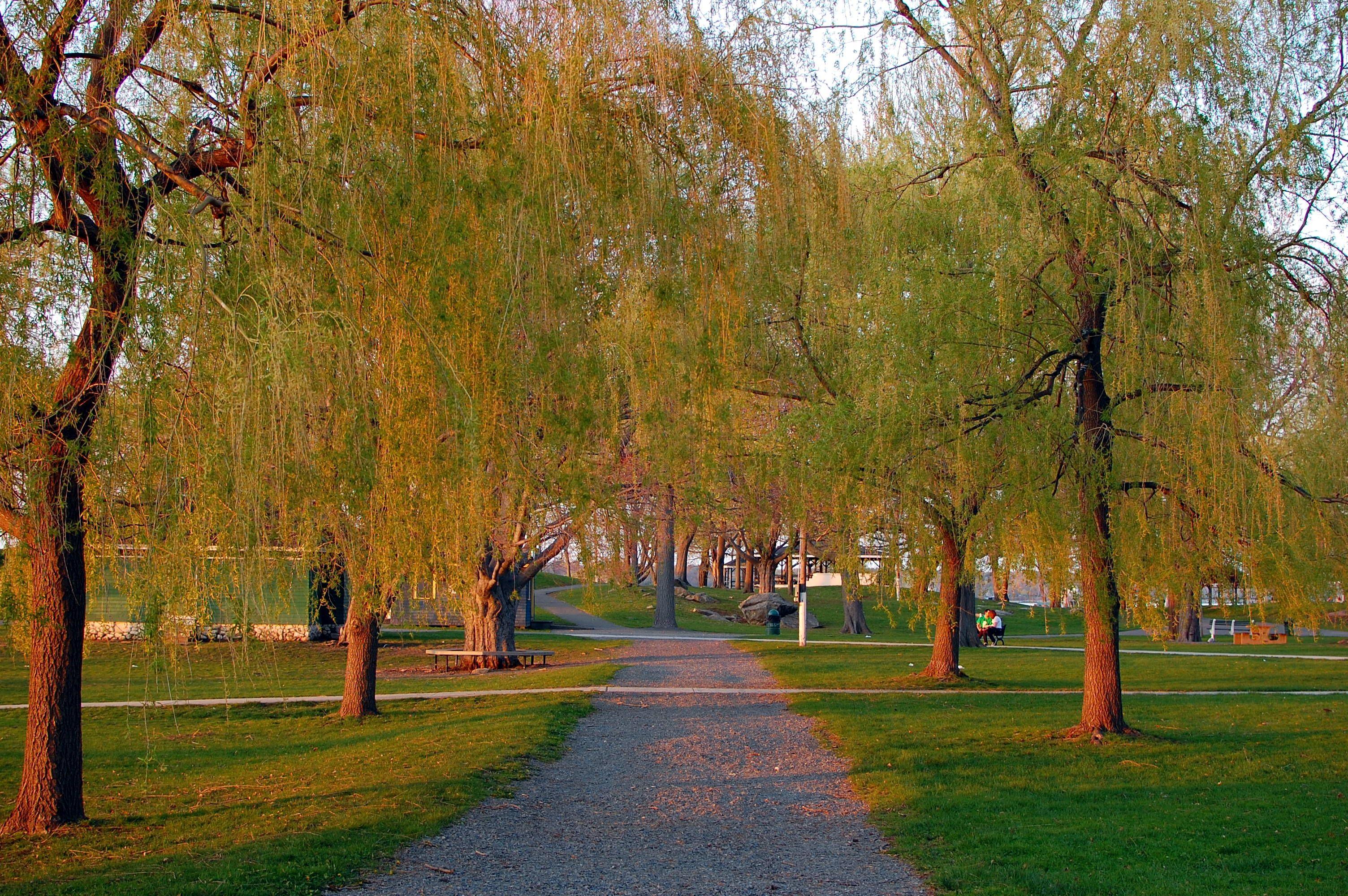 Salem Willows Path.jpg