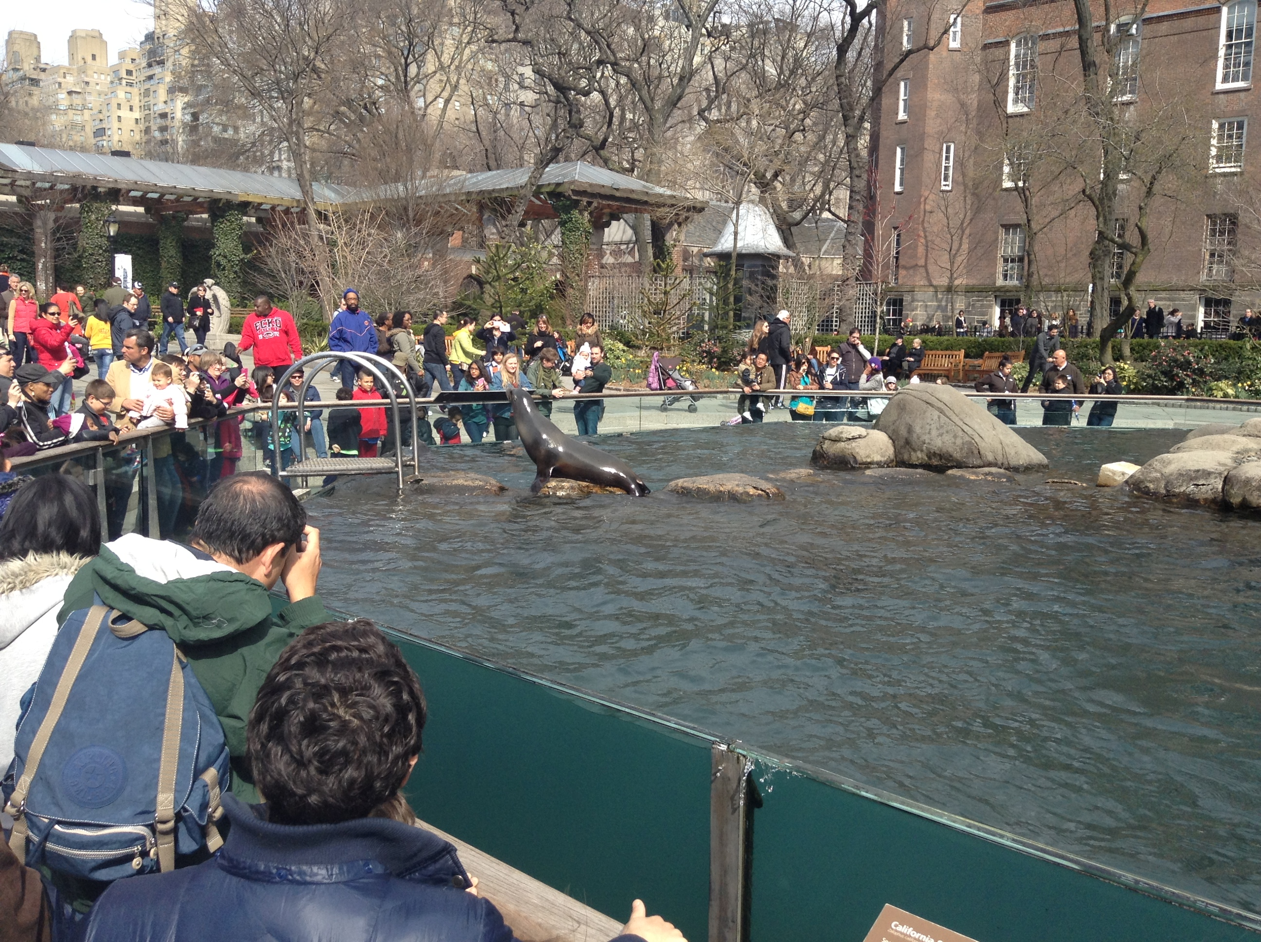 File Sea Lions Entertaining Crowd In Central Park Zoo New York