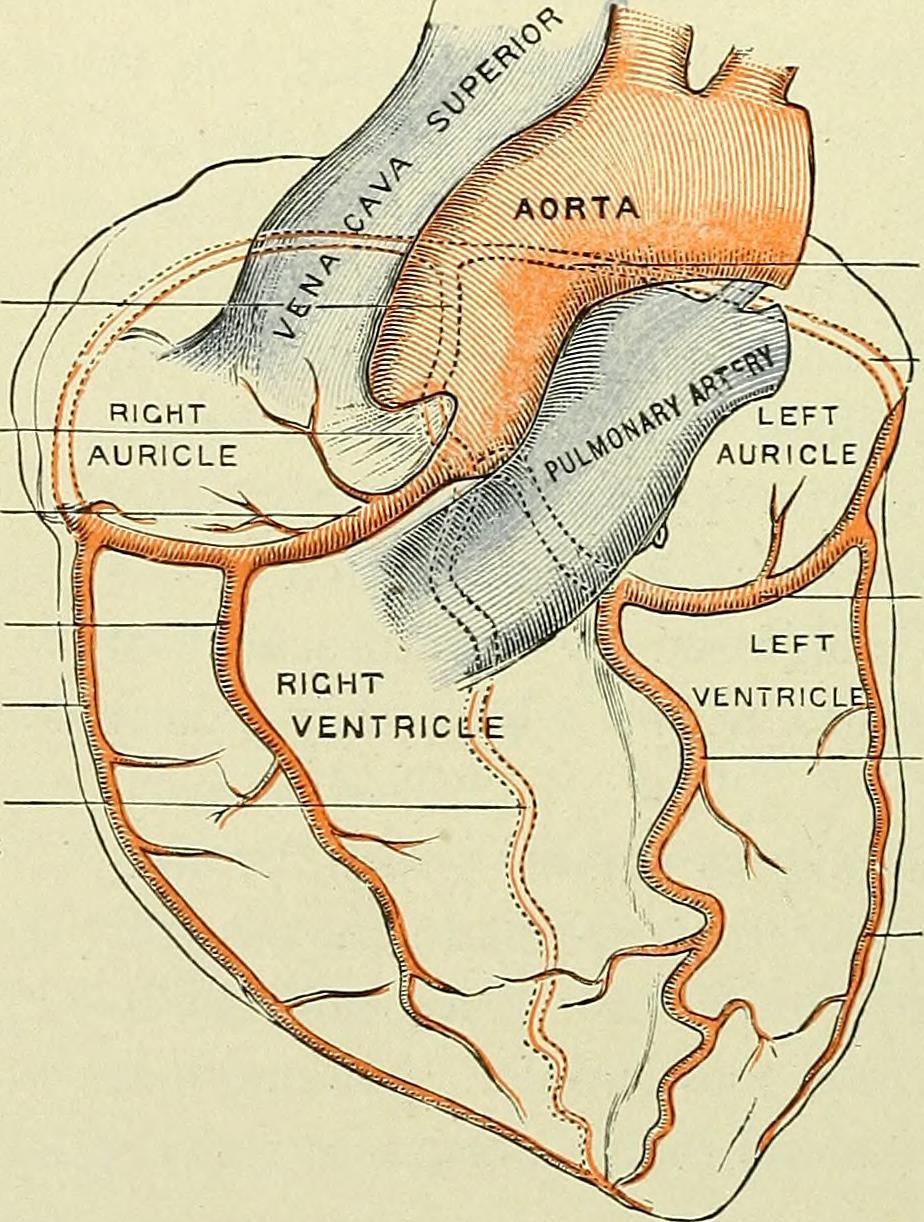 Vistoso Nursing Anatomy And Physiology Books Imagen - Imágenes de ...