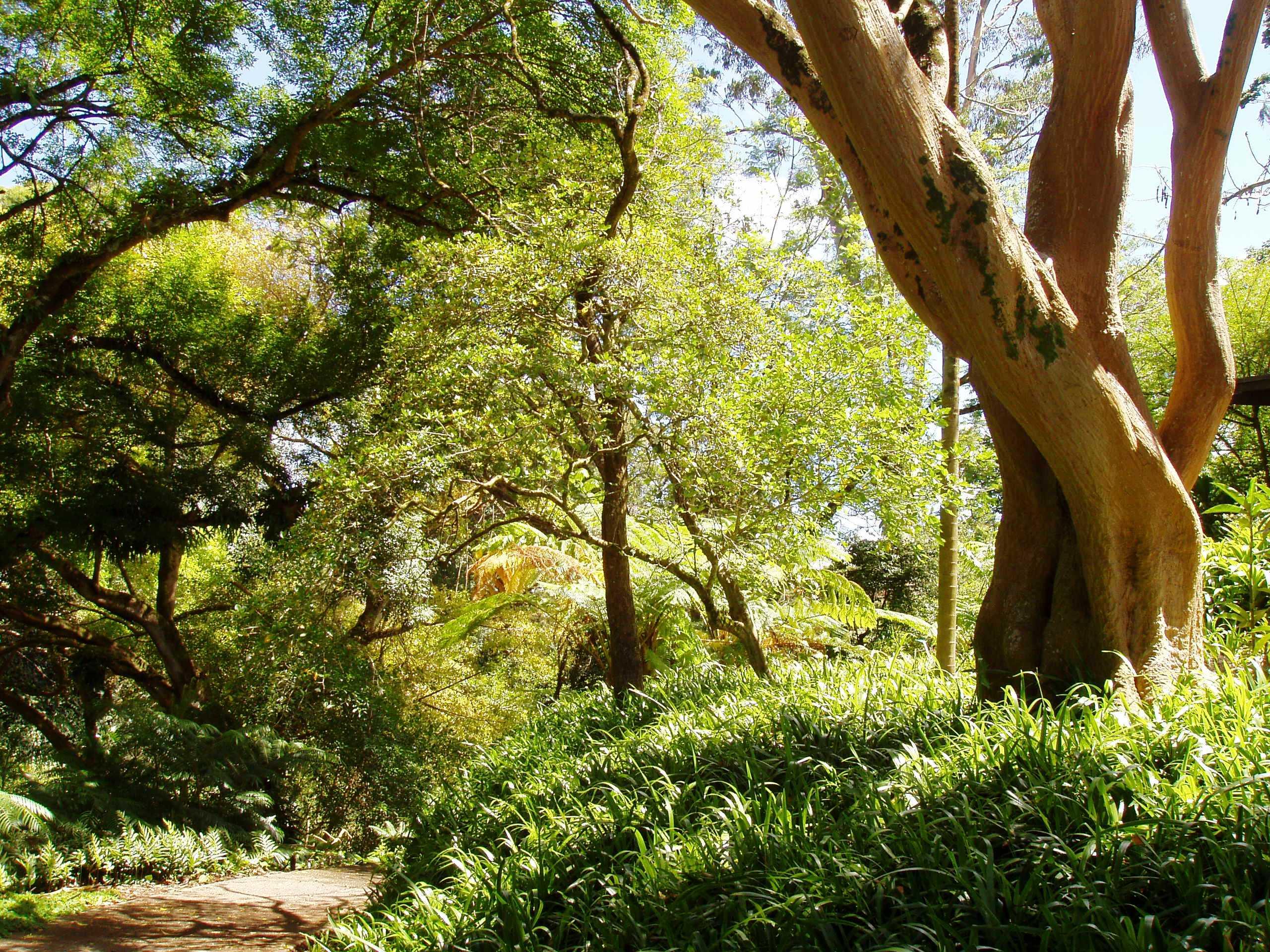 File:Wahiawa Botanical Garden - shady park view JPG