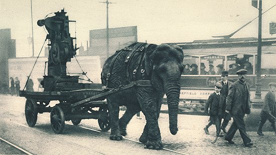 File:Ww1-elephant.jpg