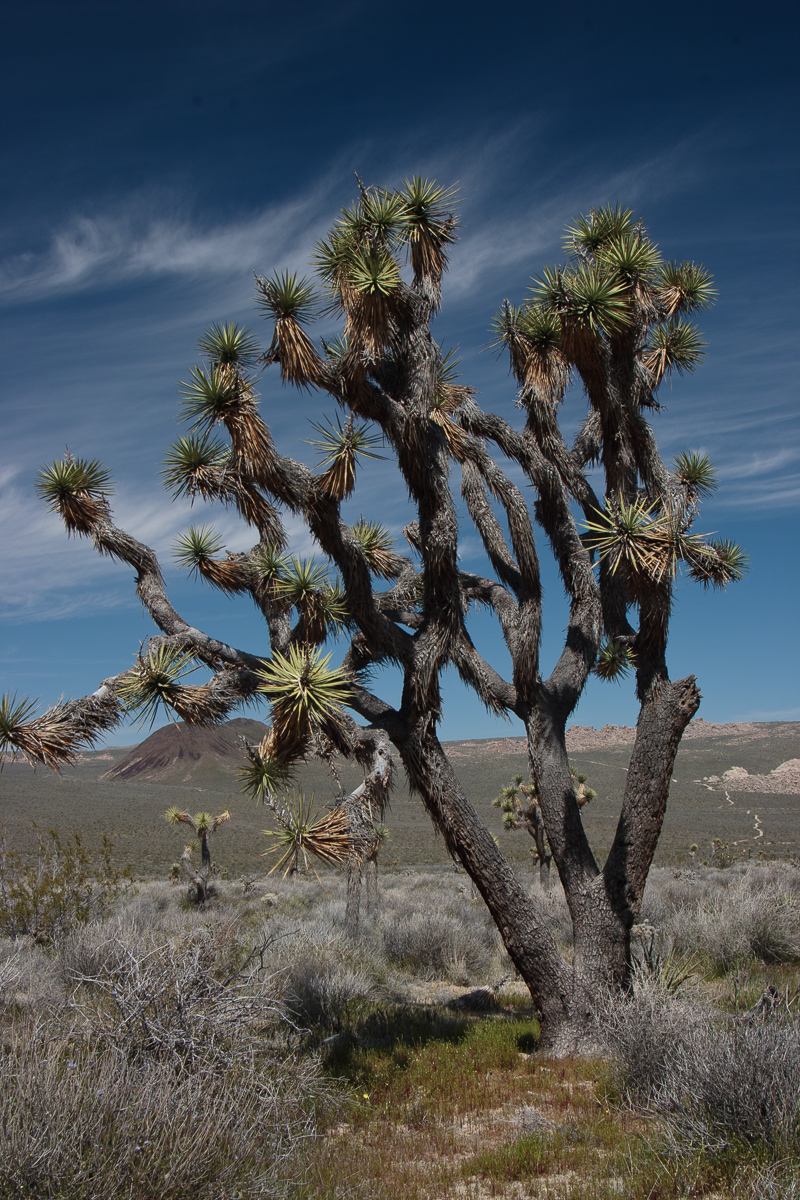 Joshua Tree National Park - Travel guide at Wikivoyage