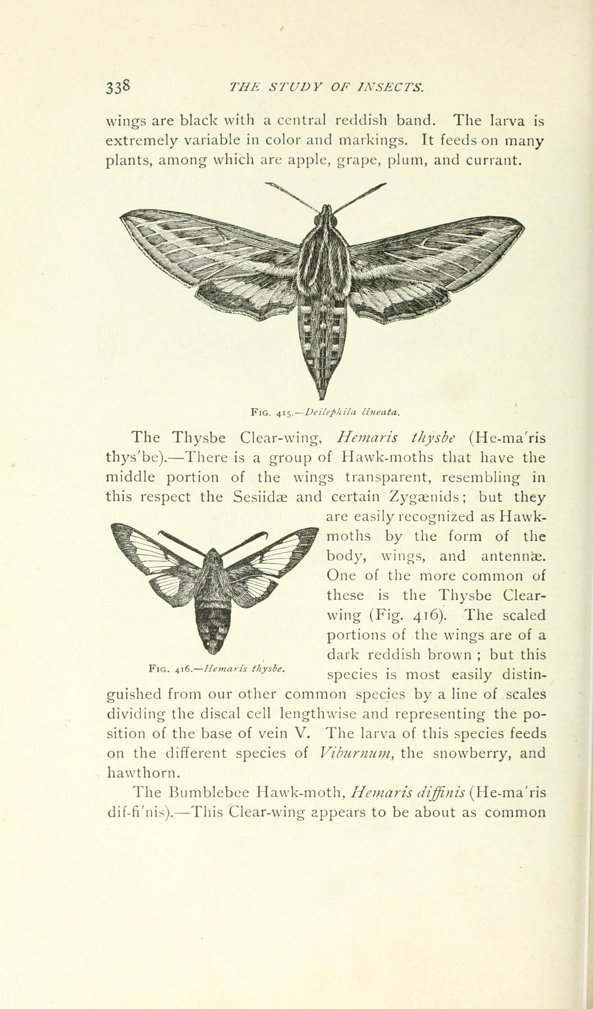 File:A manual for the study of insects (Page 338) BHL18343364.jpg