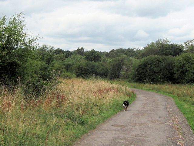 An Overcast Day on Bookham Common - geograph.org.uk - 1416492
