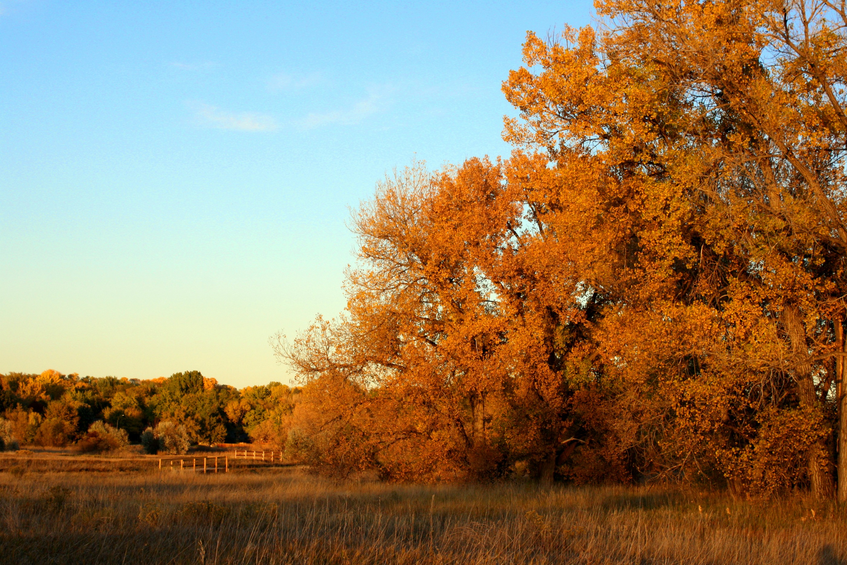 File:Beautiful Autumn Day.jpg