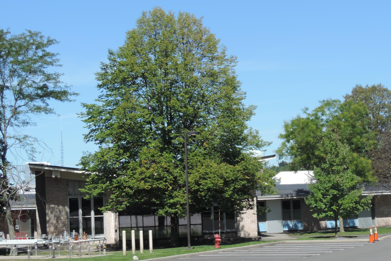 Blythedale Children's Hospital - Wikipedia