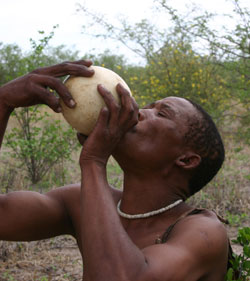 Bushmen Drinking water from Ostrich egg