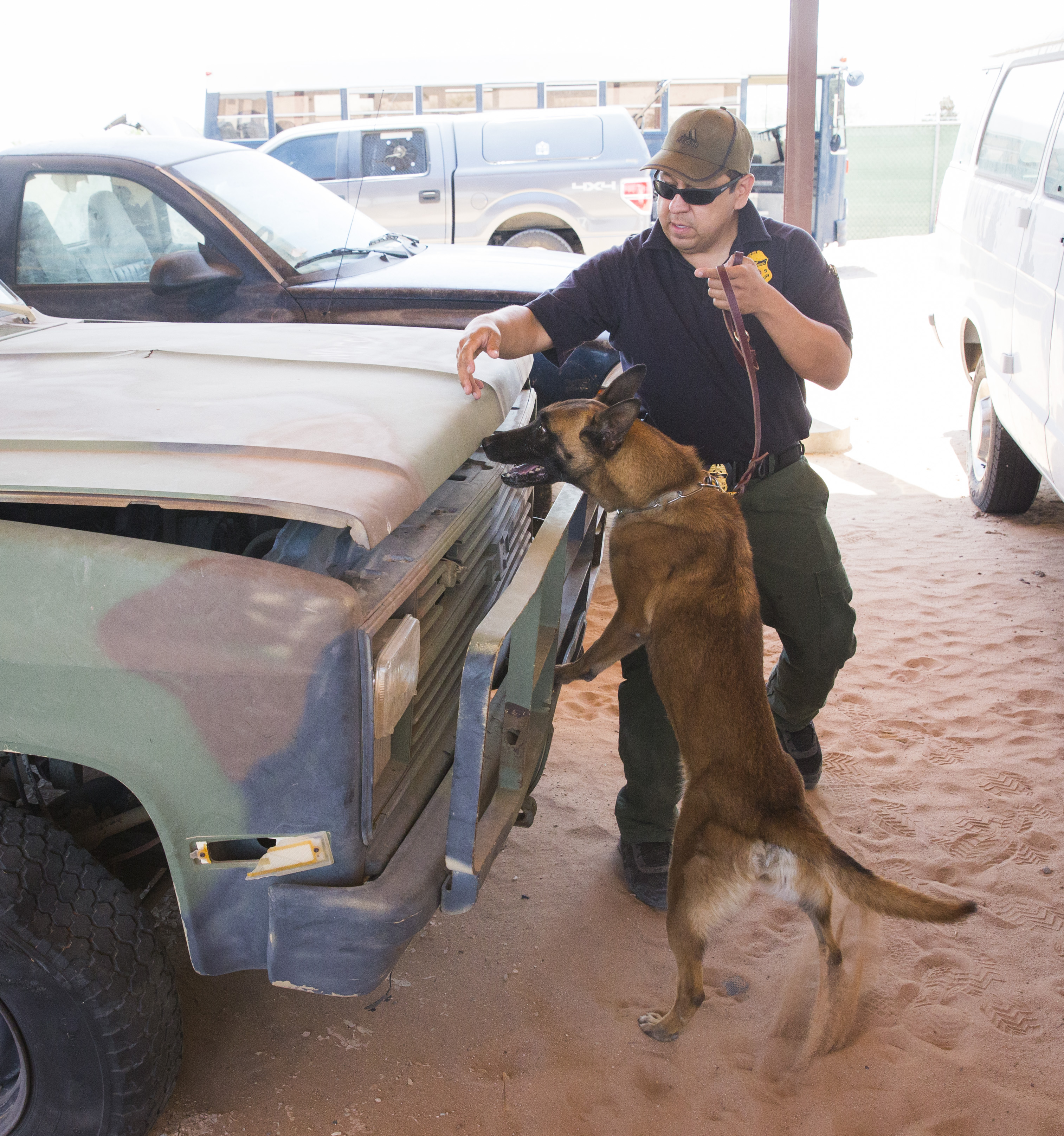 dog training el paso
