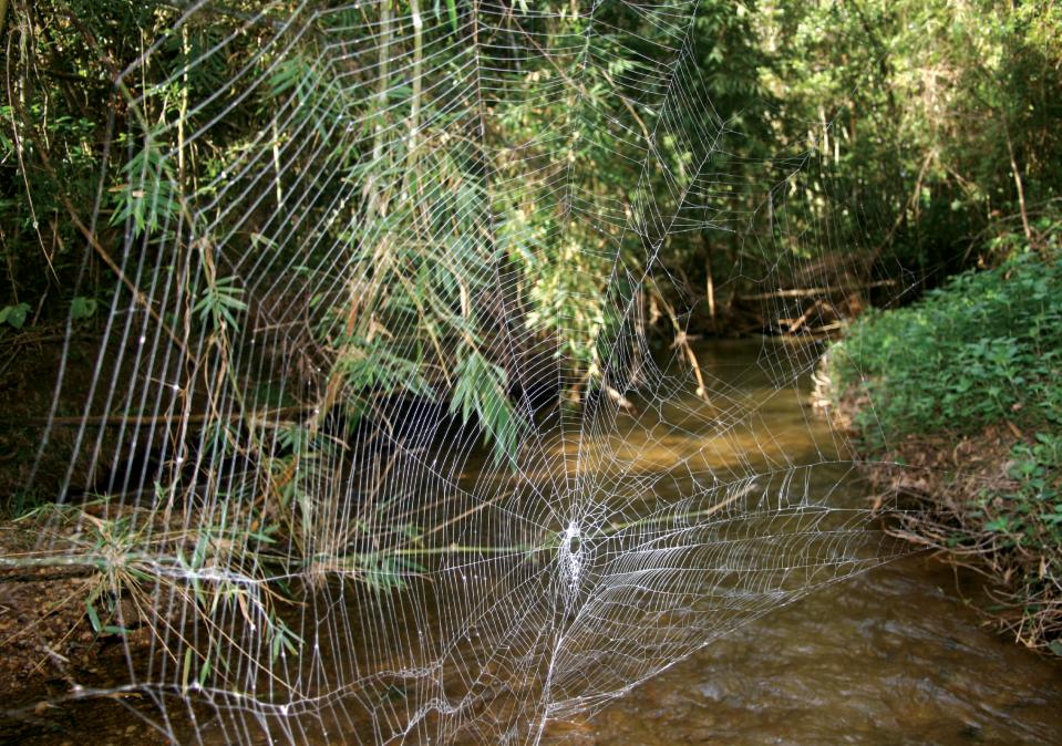 Resultado de imagen para araña de corteza de darwin