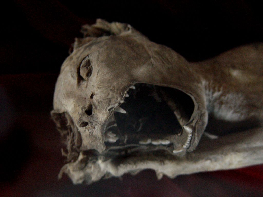 Image Result For Skull With Ar