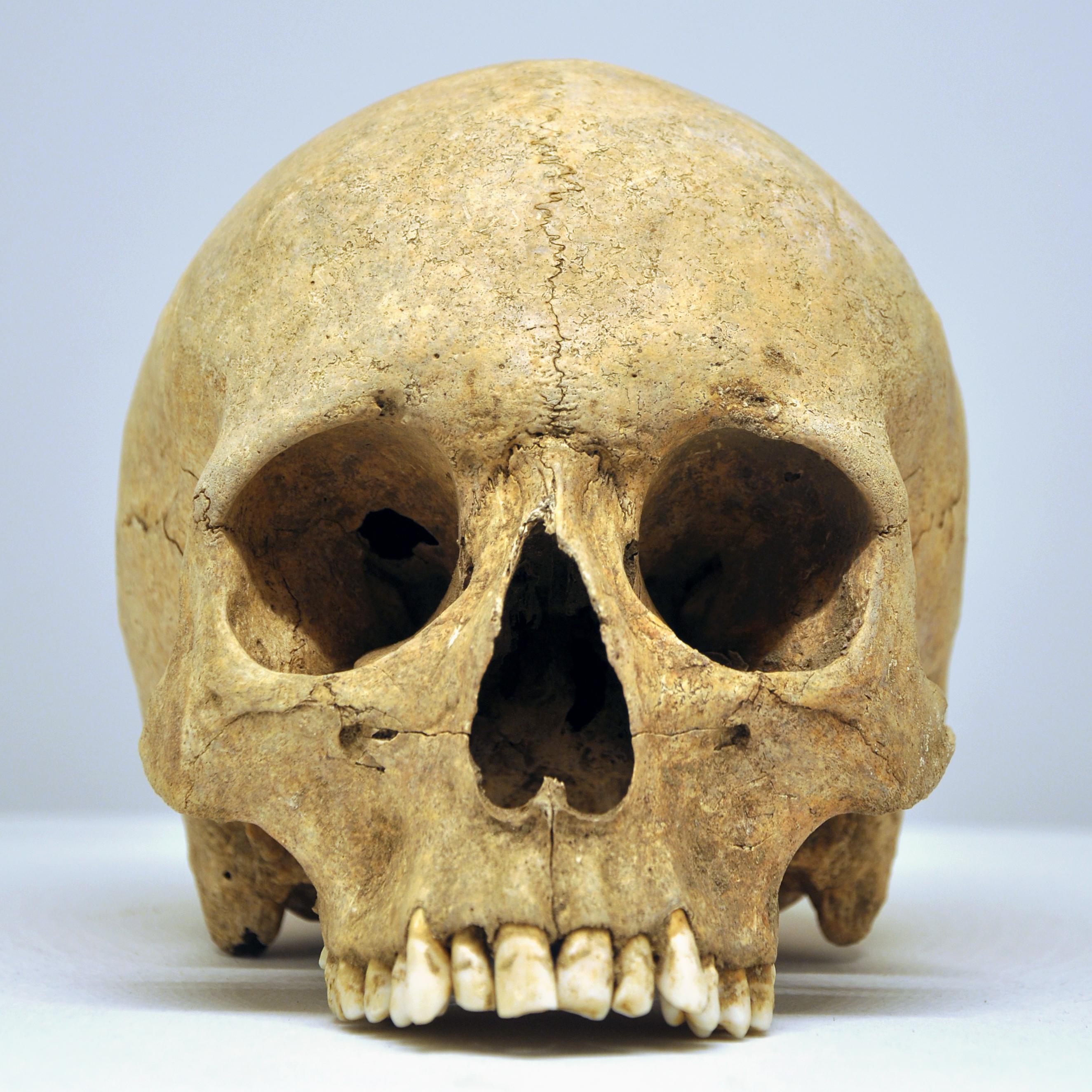 Plus Size Skull Rings