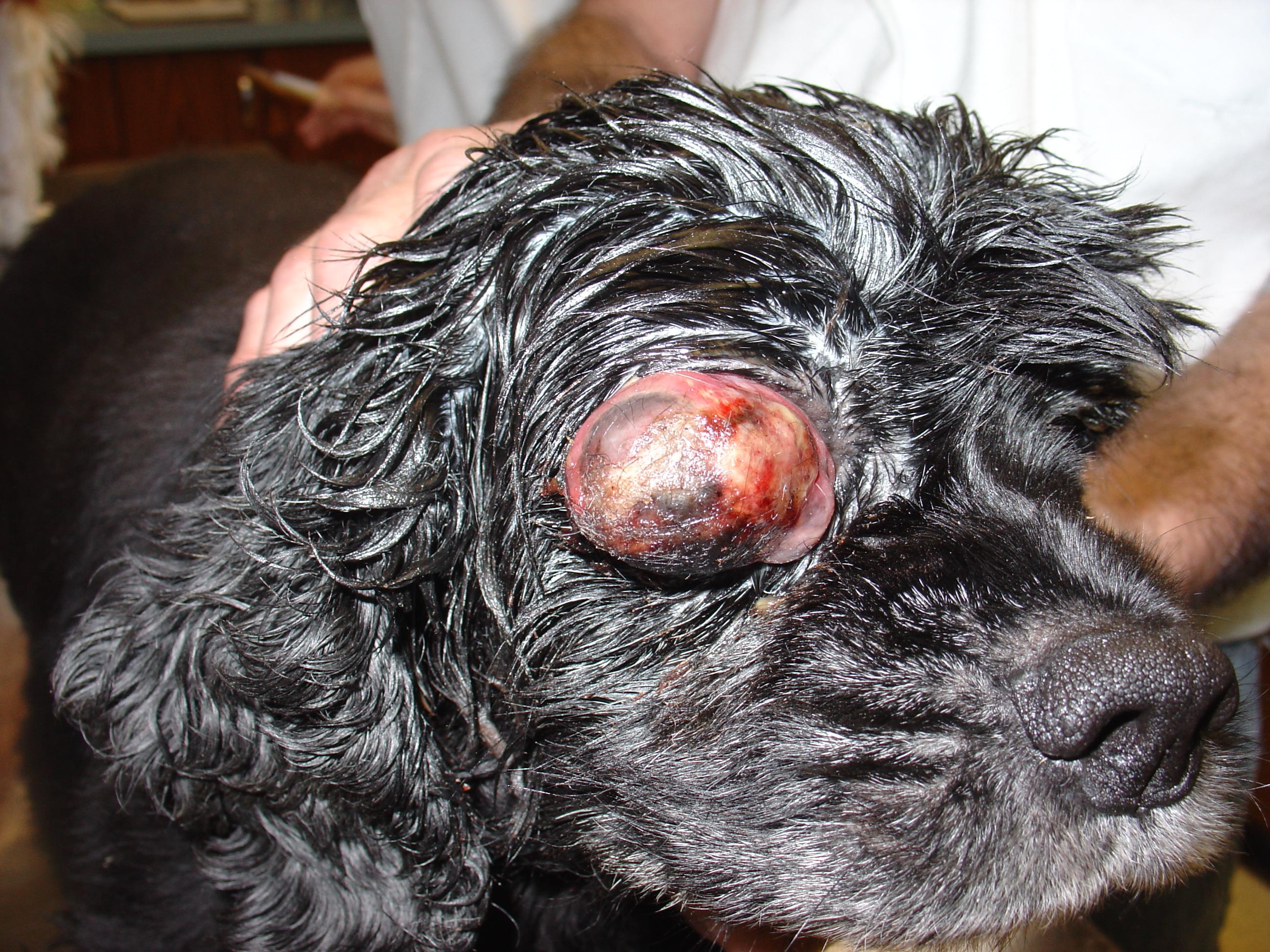 Image Result For Sheltie Dog Coloring