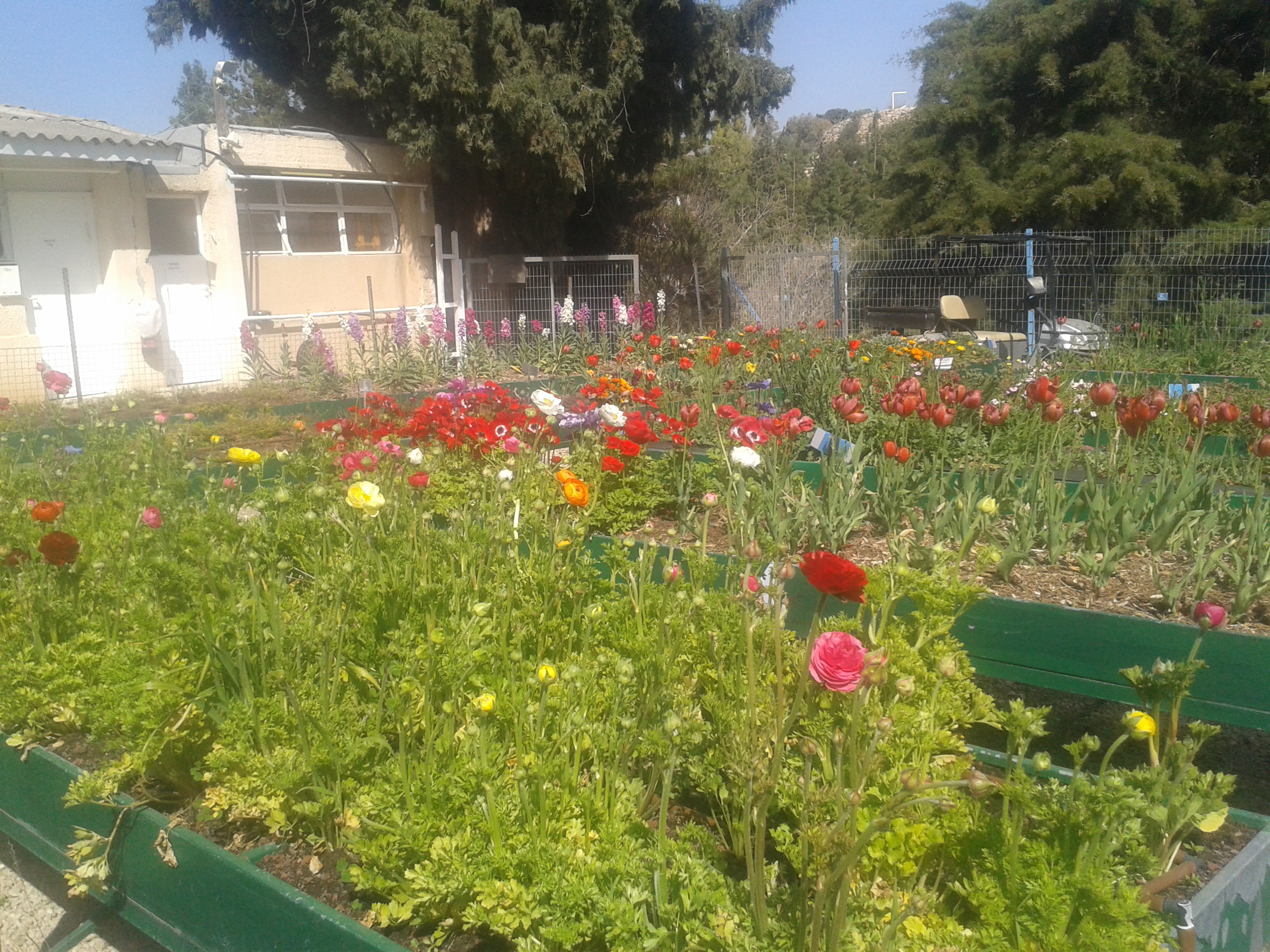 file flowers in school garden botanical garden jerusalem israel