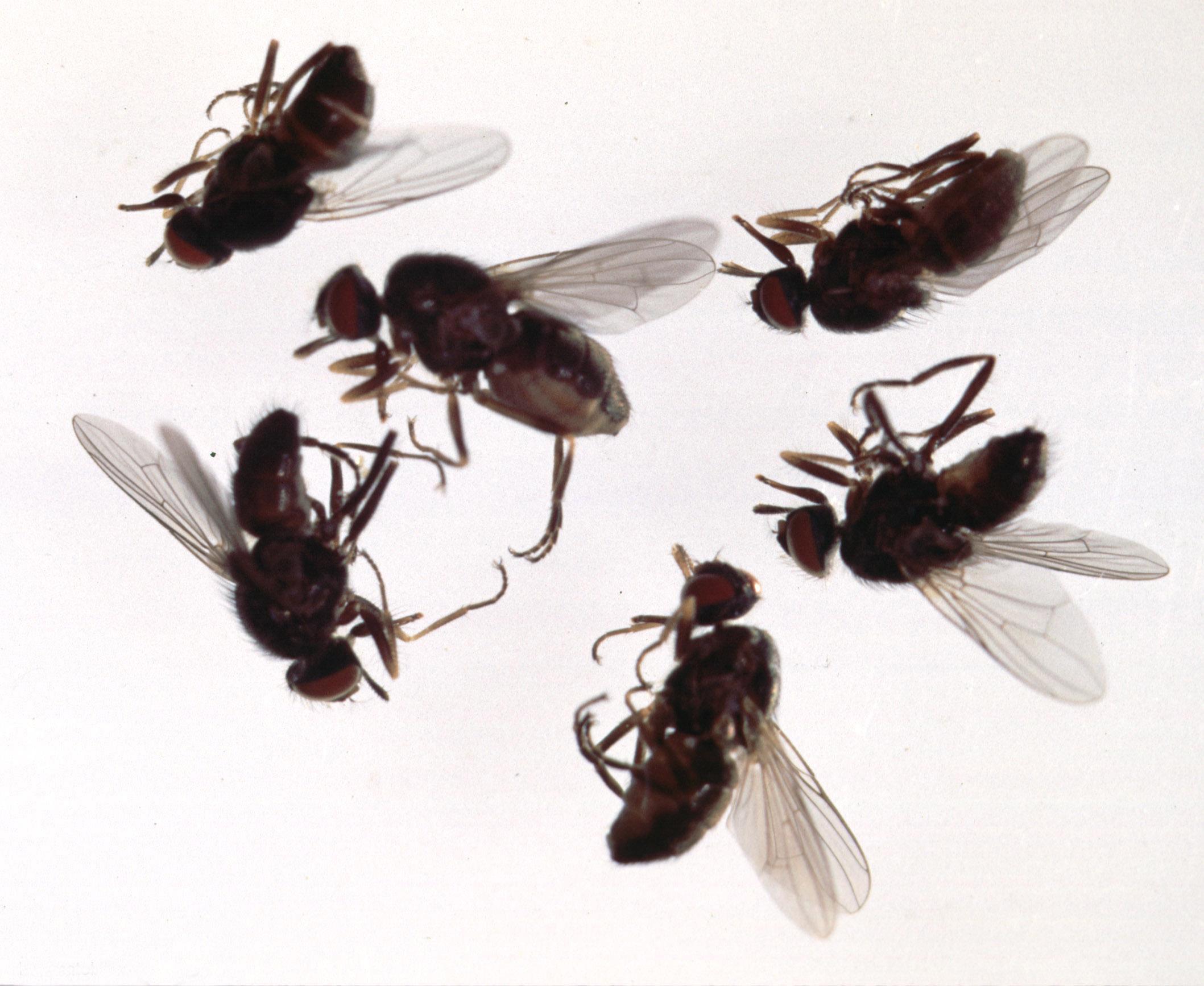 Flies In The Kitchen Sink