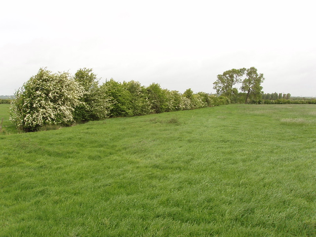 Hawthorn hedge in pasture - geograph.org.uk - 428722