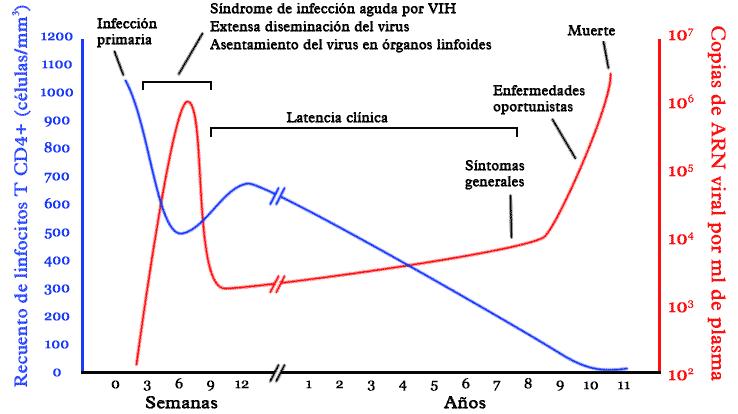 fase de la infección por vih